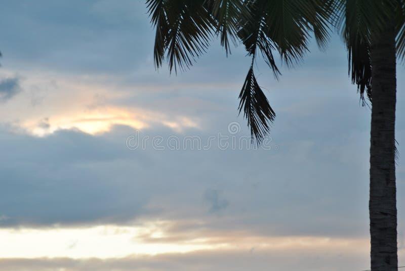 Sky tree royalty free stock image