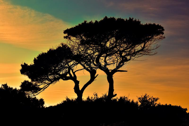 Sky, Tree, Nature, Woody Plant royalty free stock images