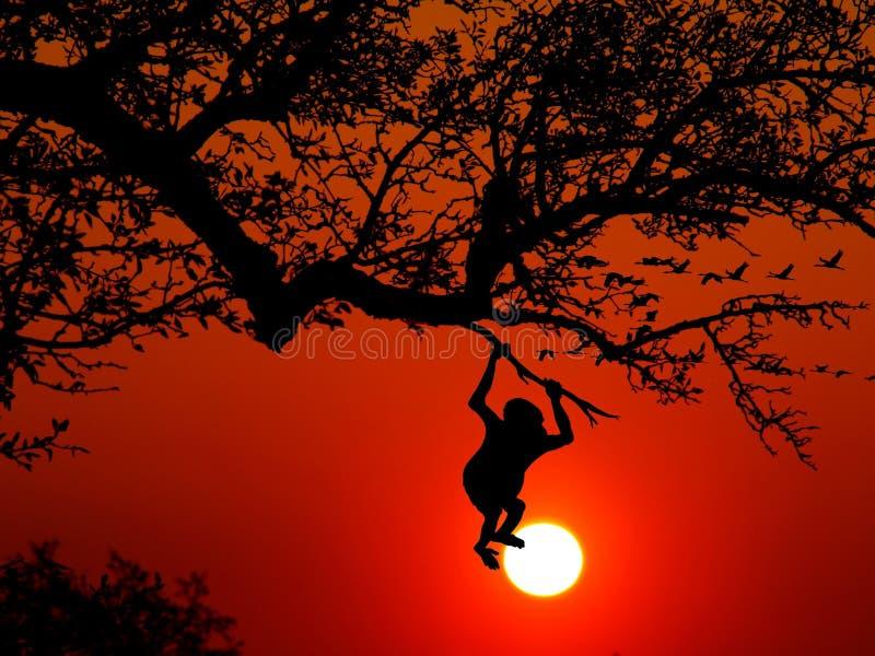Sky, Tree, Silhouette, Orange stock photography