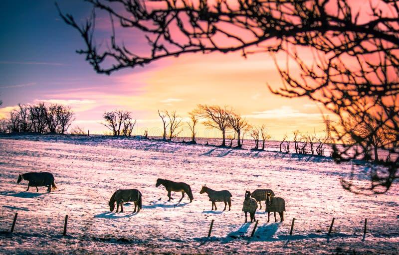 Sky, Tree, Winter, Wildlife royalty free stock photos