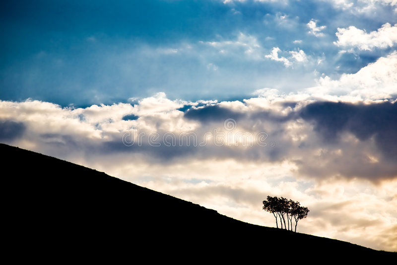 Sky and trees royalty free stock photo