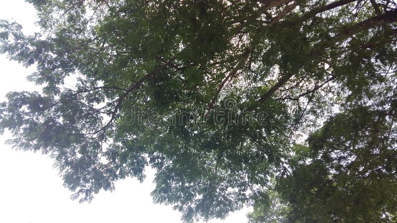 Sky trees, deciduous trees, shady trees, green air surfaces royalty free stock photos