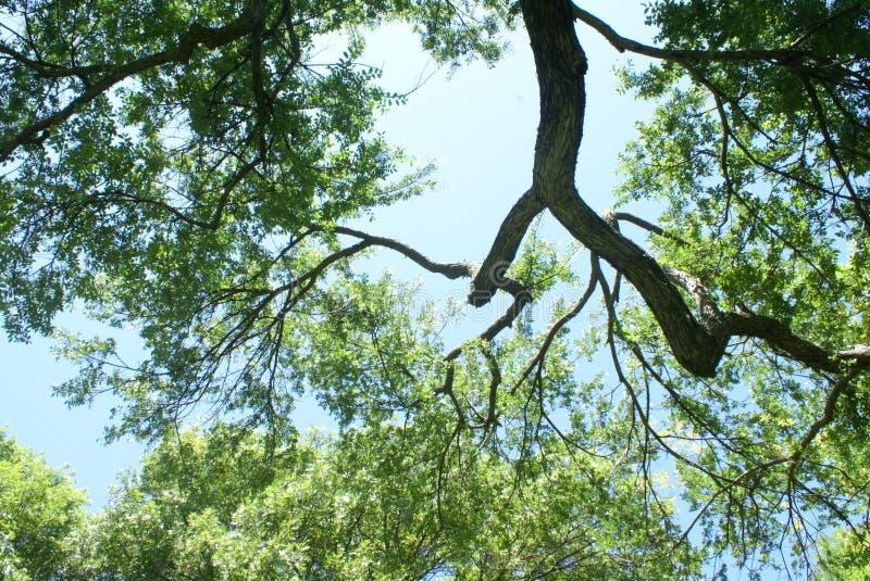 Sky and trees stock photo