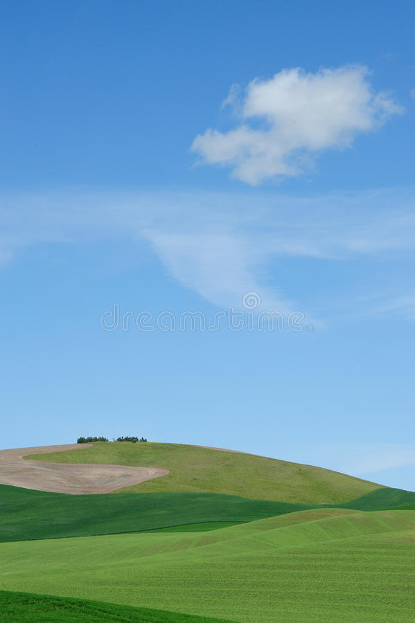 Sky and wheat field stock image