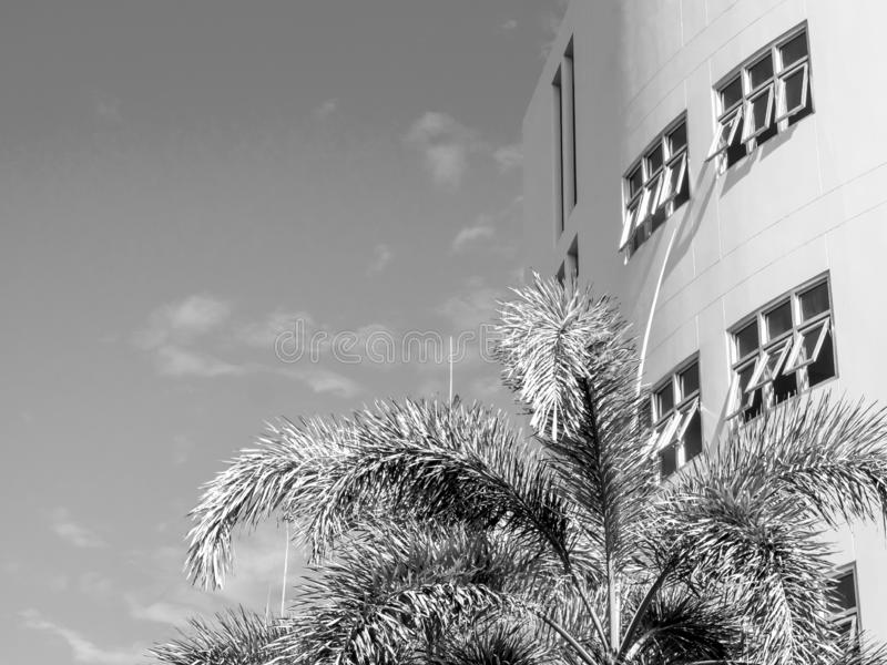 Sky with white building and the palm tree. Black and white tone royalty free stock images