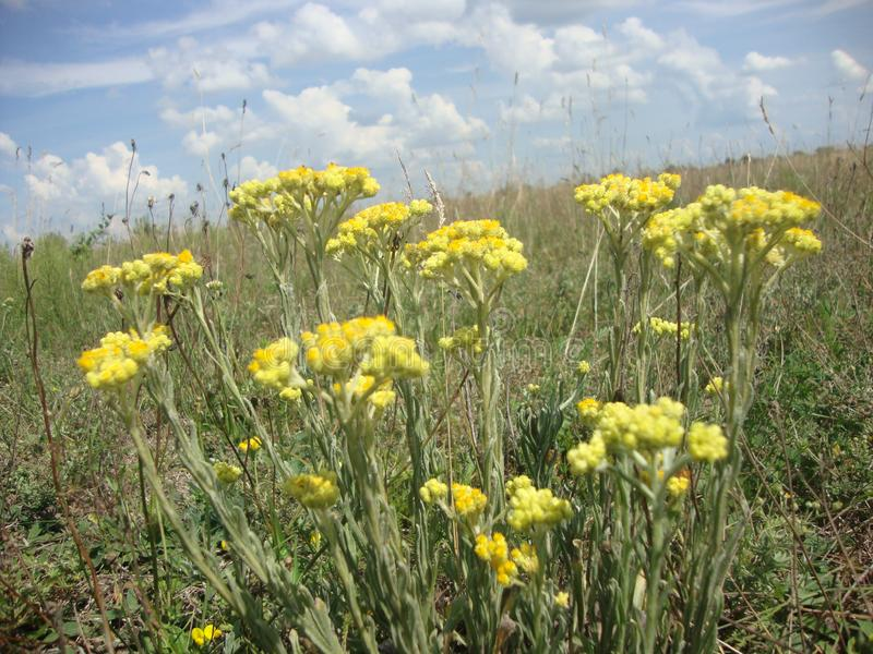 Sky yellow flowers landscape nature summer time. From ancient times people considered the sky to be the place where the gods live. Most polytheistic religions royalty free stock images