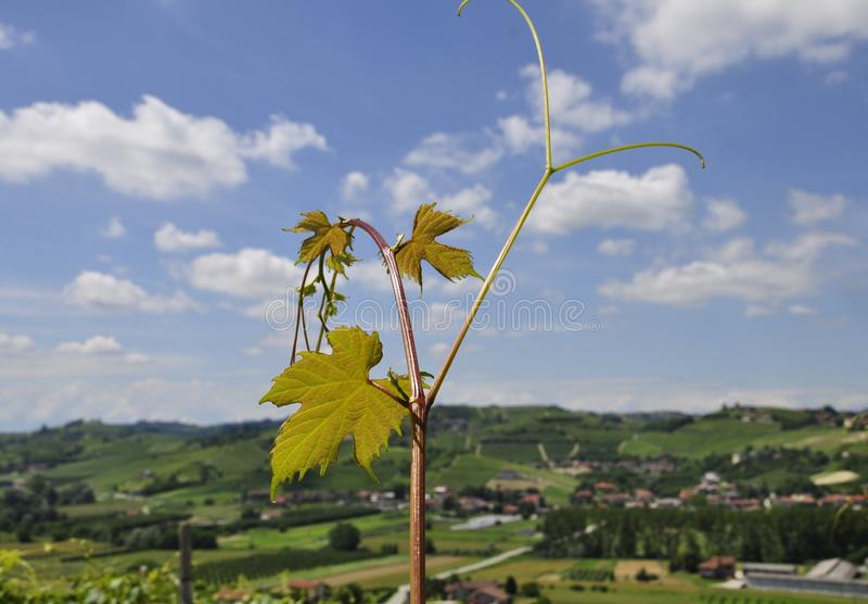 Sky, Yellow, Leaf, Field Free Public Domain Cc0 Image