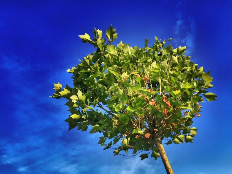 Sky, Yellow, Tree, Flora royalty free stock image