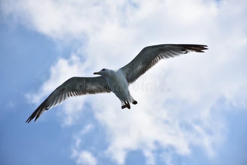 Skybird obrazy royalty free