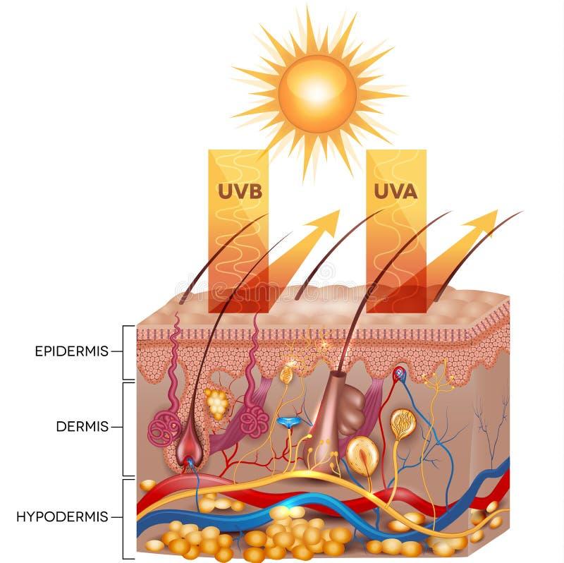 Skyddad hud med sunscreenlotion vektor illustrationer