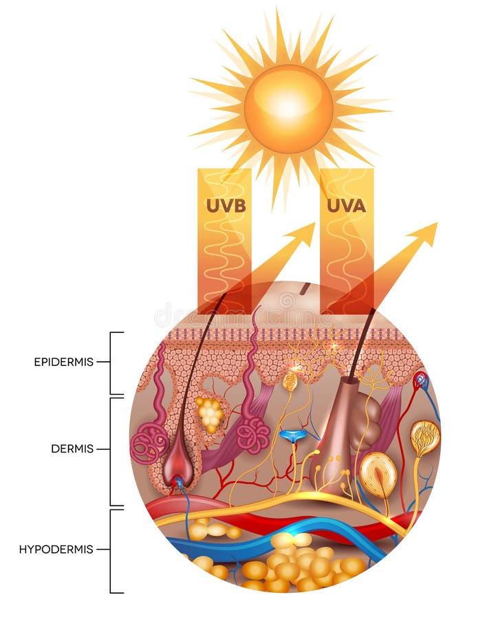 Skyddad hud med sunscreenlotion stock illustrationer