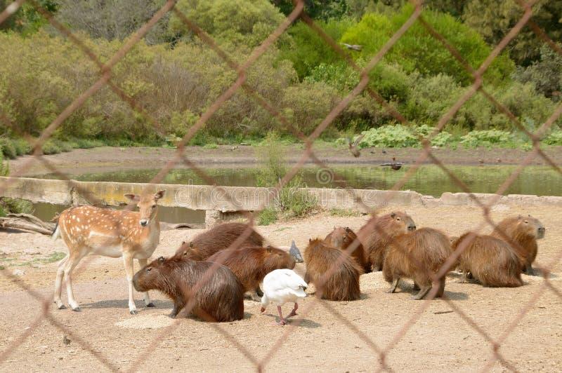 Skyddade djur i den naturliga reserven, Montevideo Uruguay fotografering för bildbyråer