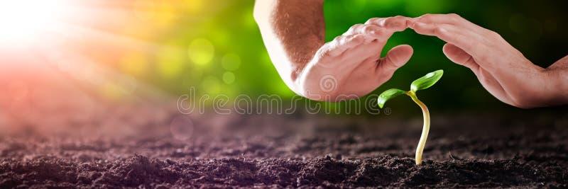 Skyddande händer över den lilla växten fotografering för bildbyråer