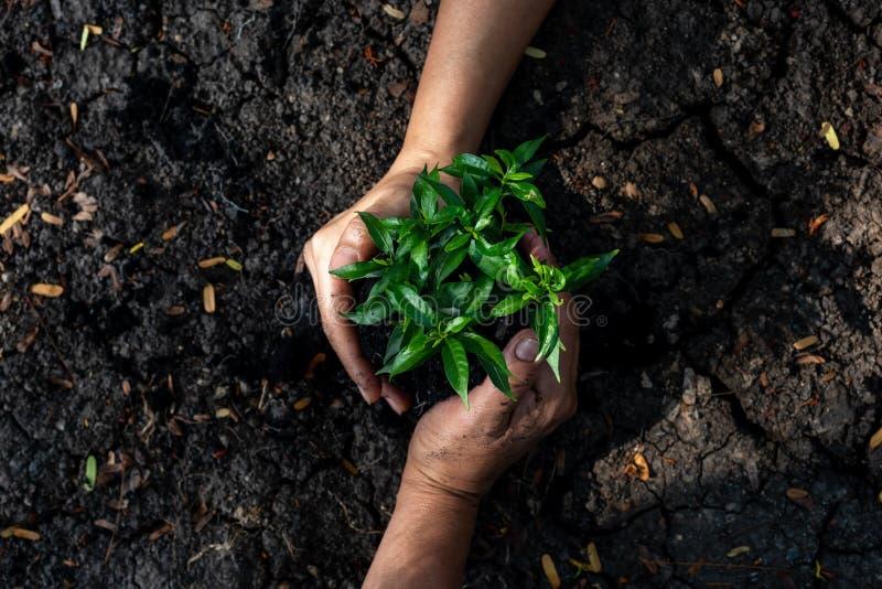 Skyddande träd för handlagarbete som växer upp och planterar på land för för att förminska global uppvärmningjord, fotografering för bildbyråer