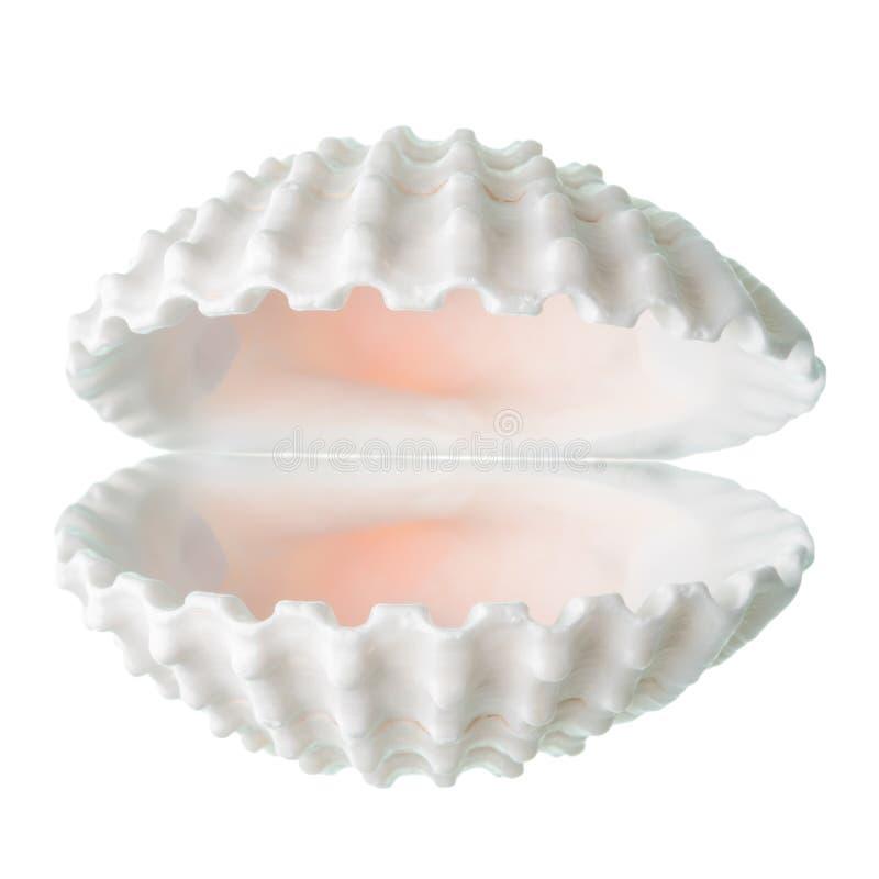 Skyddsbegreppet av den öppna vita cockleshellen isoleras på whit arkivbild