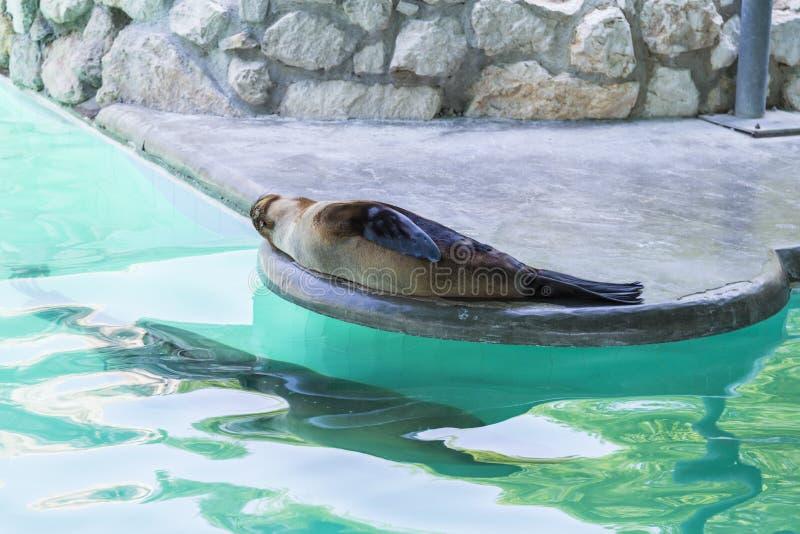 Skyddsremsor i zoo royaltyfria foton