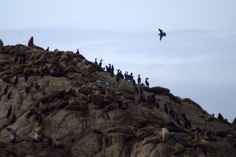 Skyddsremsor och kormoran vilar på en vagga royaltyfri bild