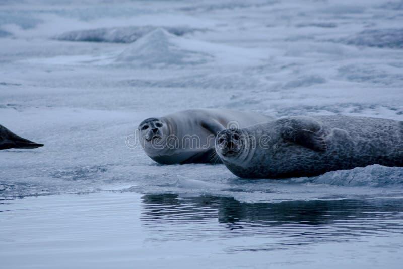 Skyddsremsor på is fotografering för bildbyråer