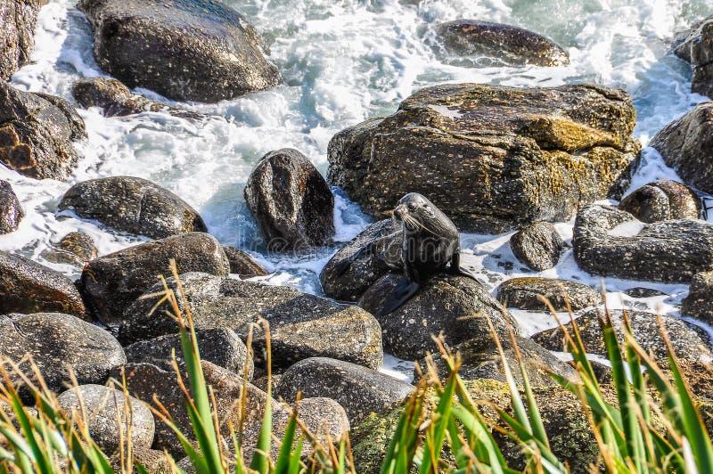 Skyddsremsor på en vagga i udde Foulwind, Nya Zeeland fotografering för bildbyråer