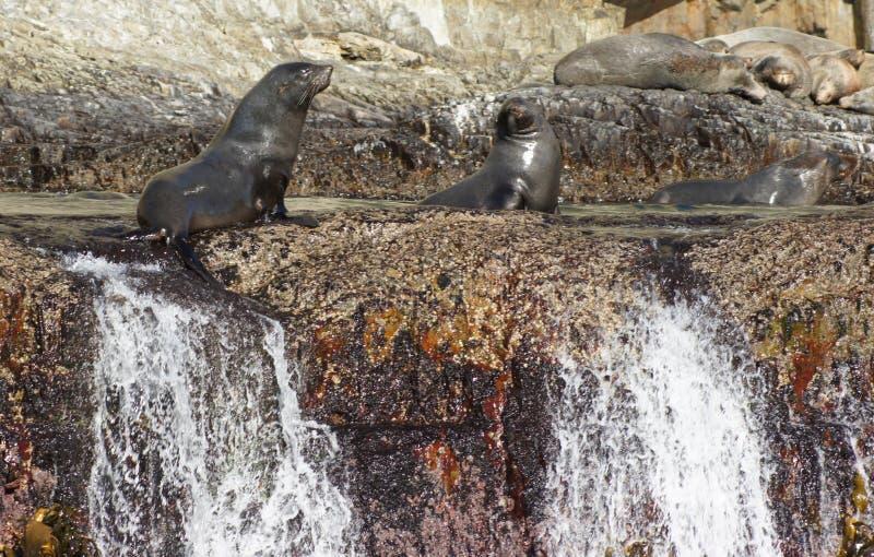 Skyddsremsor på Rocks på havet fotografering för bildbyråer
