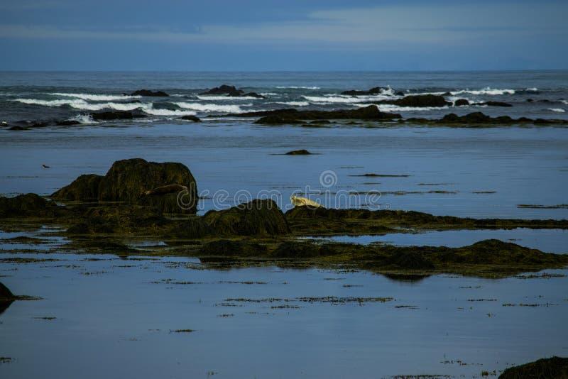 Skyddsremsor på strand royaltyfri bild
