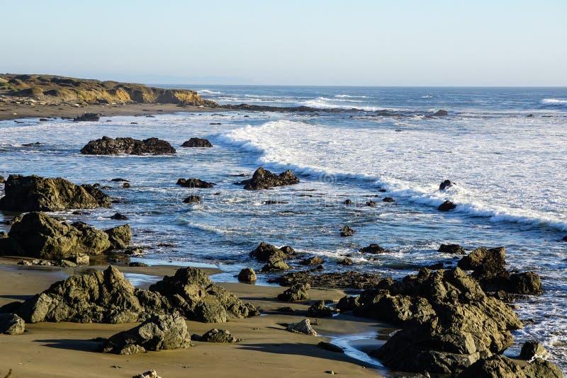 Skyddsremsor som ta sig en tupplur på ett avstånd på den steniga Kalifornien kusten royaltyfri fotografi