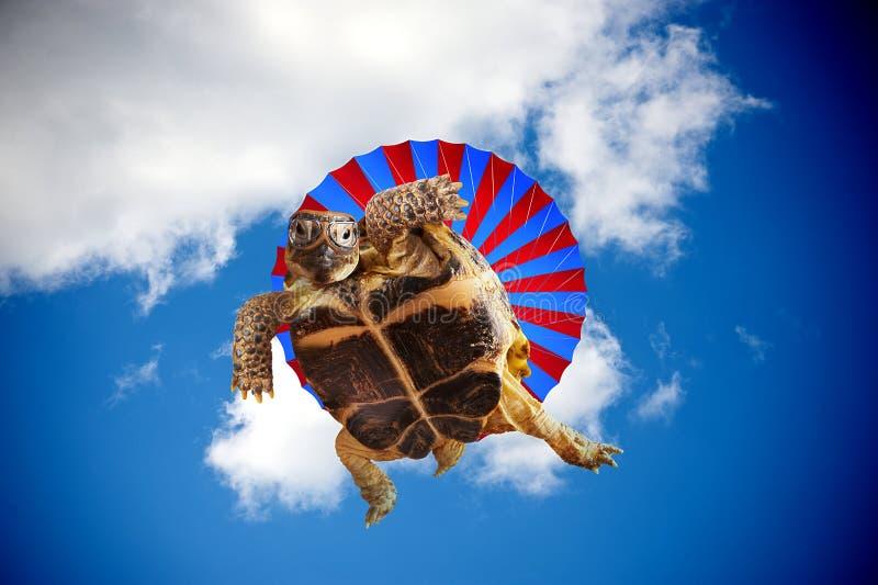 Skydiving obrazy stock
