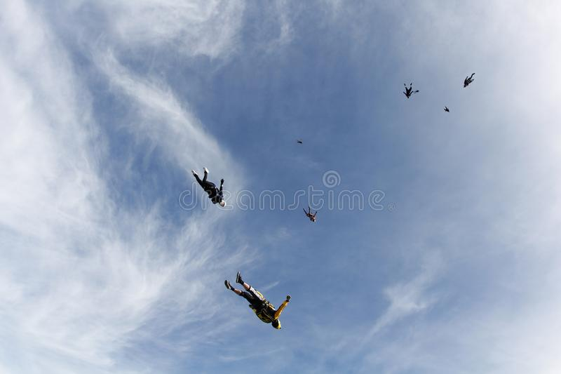 Skydiving. A flock of skydivers is in the blue sky. Flocking skydiving. A group of skydivers are fast flying in the sky like a birds flock stock photo