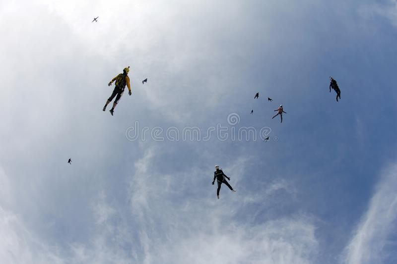 Skydiving. A flock of skydivers is in the blue sky. Flocking skydiving. A group of skydivers are fast flying in the sky like a birds flock stock photos