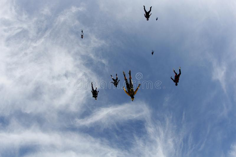 Skydiving. A flock of skydivers is in the blue sky. Flocking skydiving. A group of skydivers are fast flying in the sky like a birds flock stock images