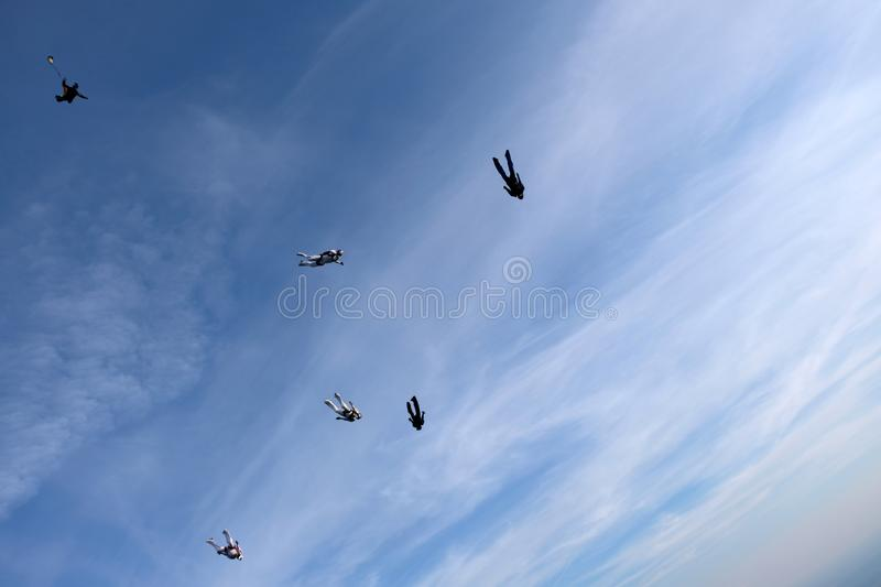 Formation skydiving in the sunset sky. Skydiving. A group of skydivers is falling in the sky royalty free stock photography