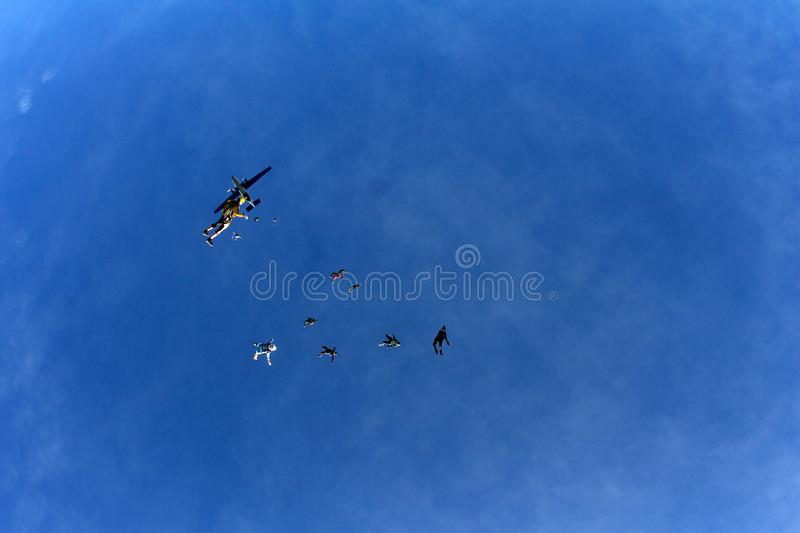Skydiving. Skydivers are flying in the sky like a flock of birds. stock images