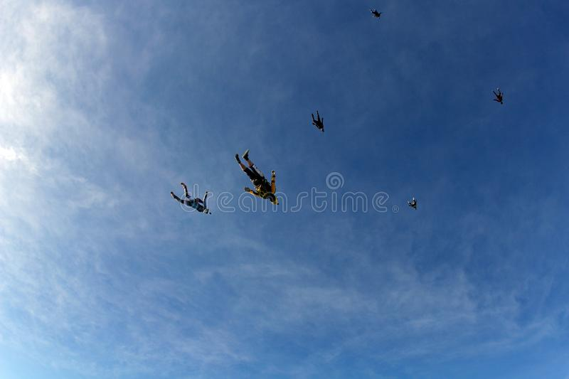 Skydiving. Skydivers are flying in the sky like a flock of birds. stock photos