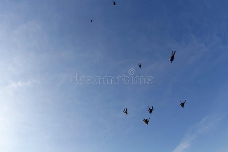 skydiving Skydivers летают в небо как стадо птиц стоковые фотографии rf