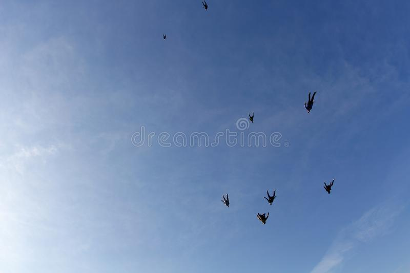 Skydiving. Skydivers are flying in the sky like a flock of birds. Skydiving. Light day and blue sky. Skydivers are flying in the blue sky like a flock of birds royalty free stock photos