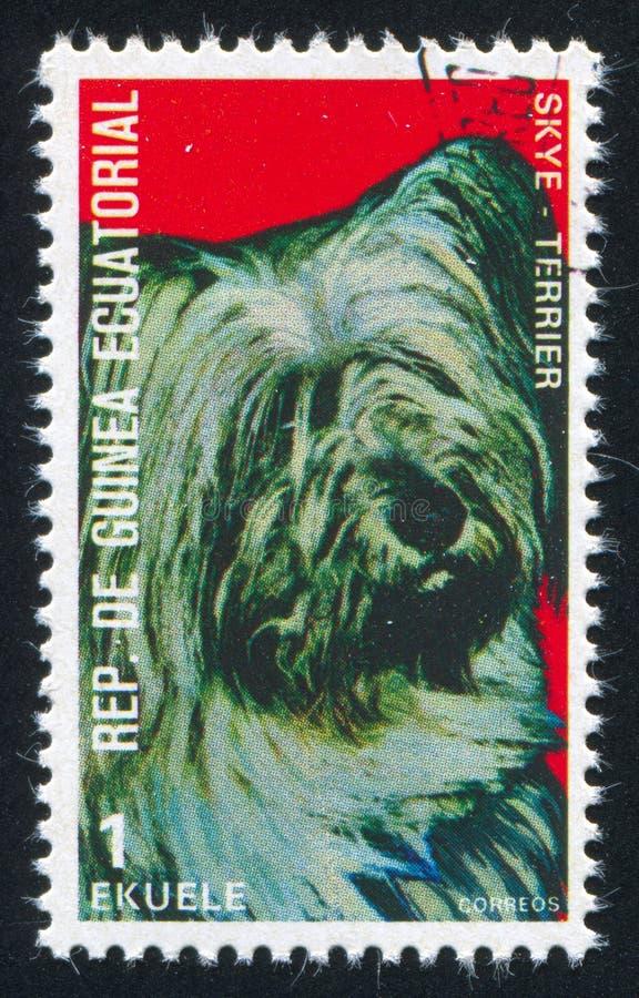 Skye Terrier fotografia stock