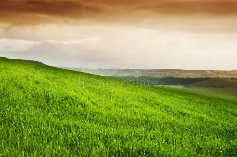 skyen för showen för växter för rörelse för den förfallna för fältet för blueoklarhetsdagen ligganden för fokusen fulla gröna var royaltyfria bilder