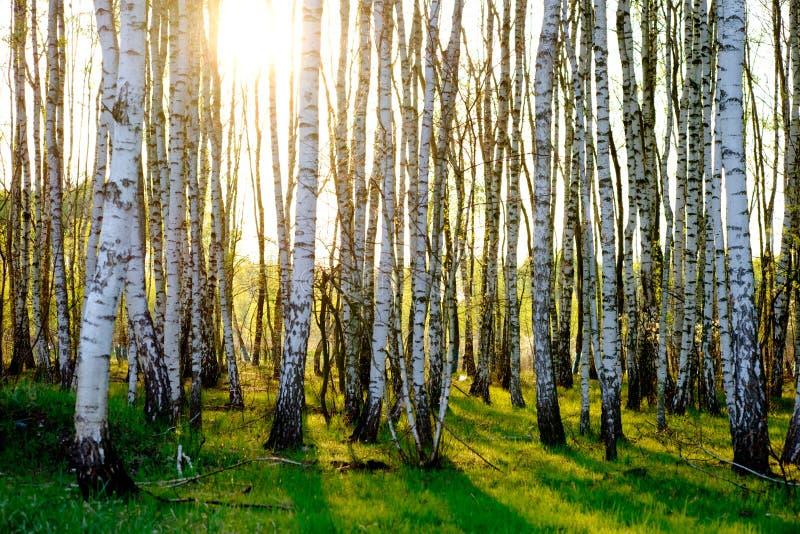 skyen för showen för växter för rörelse för den förfallna för fältet för blueoklarhetsdagen ligganden för fokusen fulla gröna var royaltyfri bild