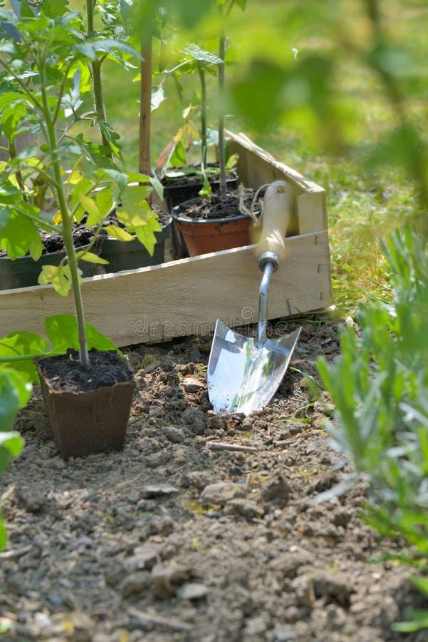 Skyffel i trädgård till att plantera grönsakväxten i trädgård royaltyfri foto