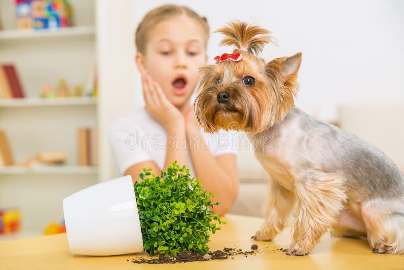 Skyldig hund och bruten blomkruka på tabellen arkivfoto