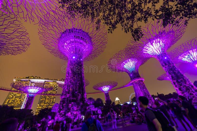 Skyline da noite de Singapura em jardins pela ba?a Bosque de SuperTree sob o c?u noturno azul em Singapura fotos de stock royalty free