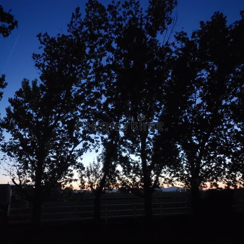 Skyline do por do sol com as árvores e o fenceline escuros foto de stock