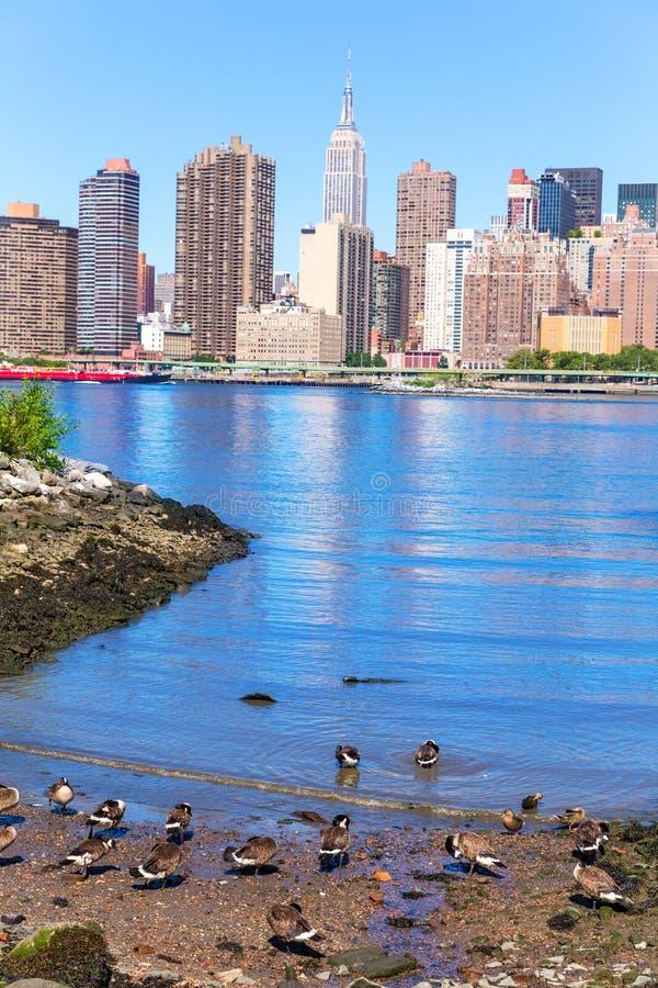 Skyline East River Manhattans New York mit Enten stockfoto