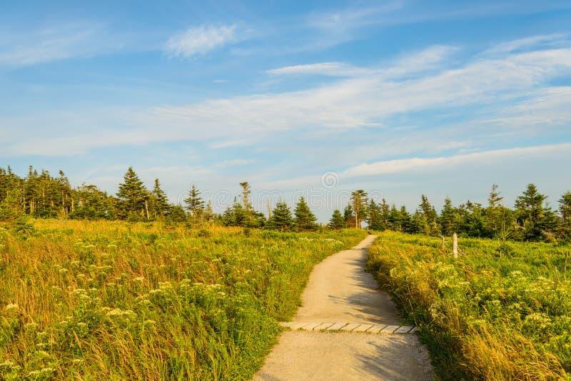 Skyline Trail Path. (French Mountain, Cape Breton, Nova Scotia, Canada stock photography