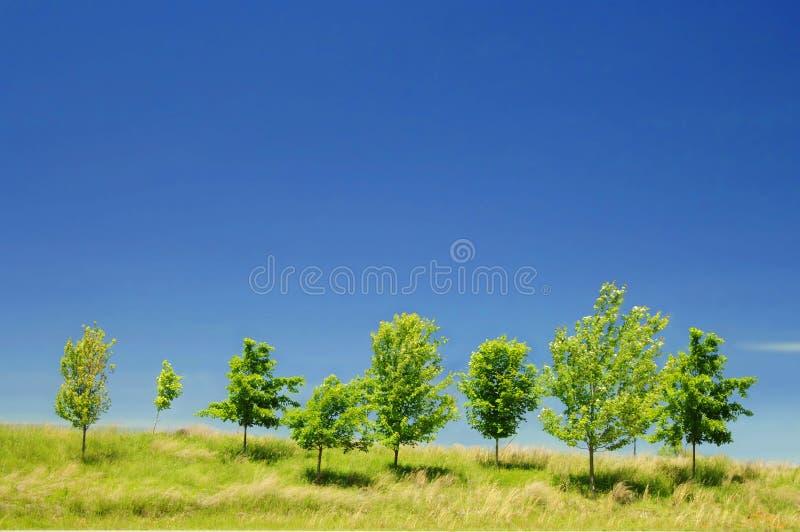 Skyline Trees stock image