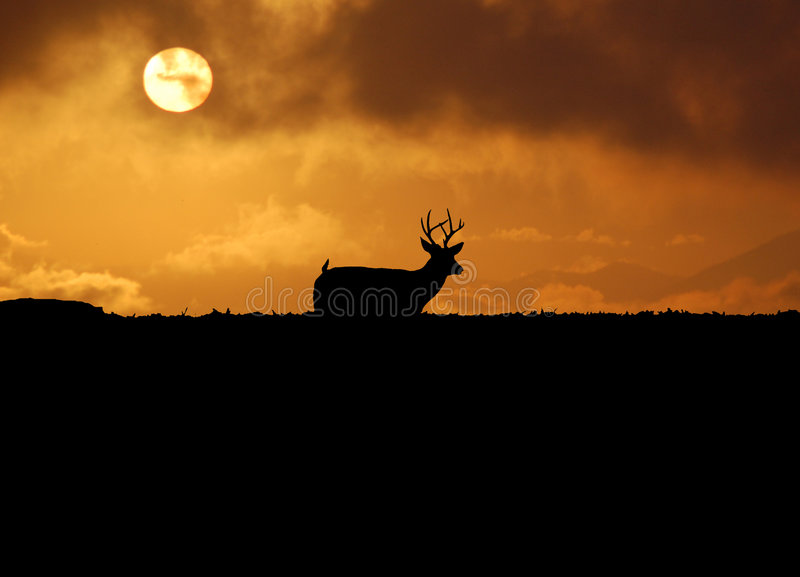 Skylined Rotwild auf Jagd stockfoto