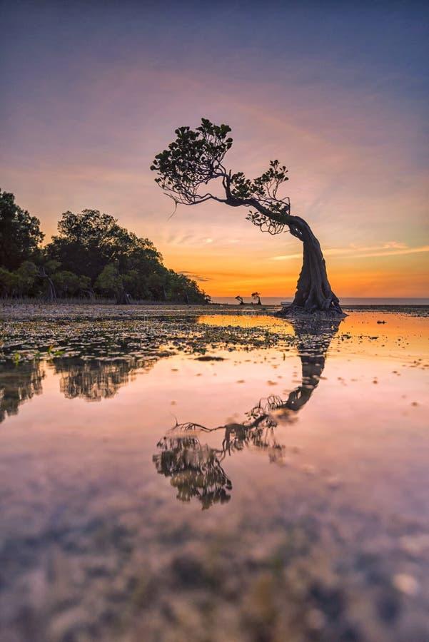 Skymning på den Walakiri stranden, Sumba ö, Indonesien royaltyfri fotografi