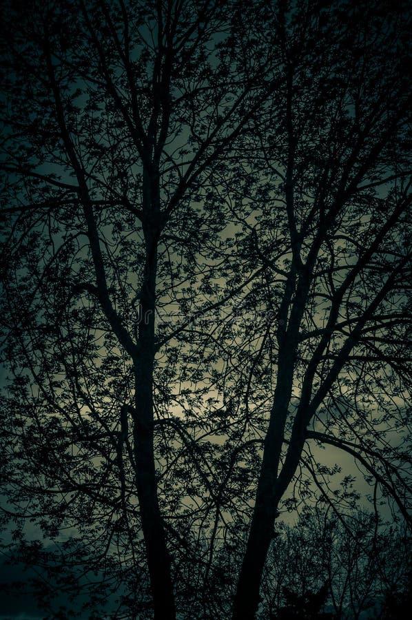 Skymningfärger som når en höjdpunkt till och med trädet royaltyfri bild
