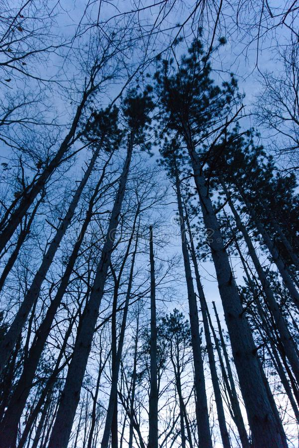 Skymningträdmarkis fotografering för bildbyråer