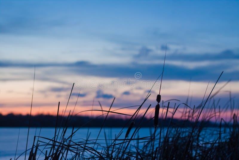 Skymningvinterlandskap, fryst sjö-, säv-, blått- och rosa färghimmel, djupblå moln, vinter, foto för naturpanoramabakgrund arkivfoto